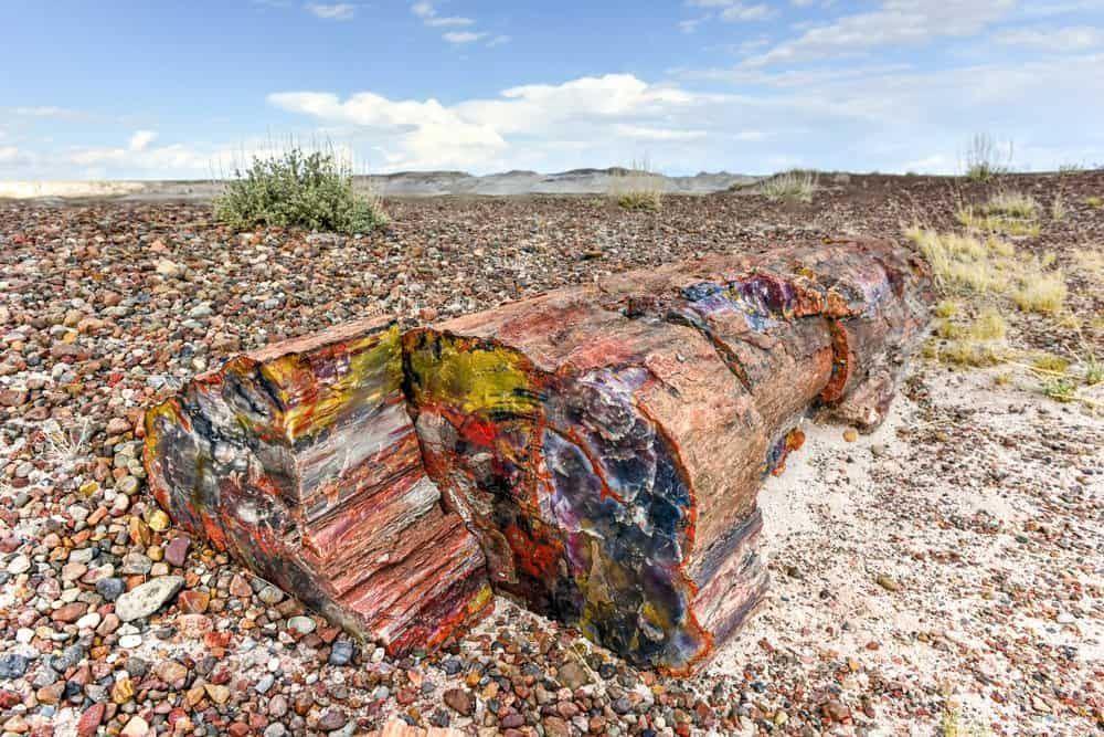 USA - Arizona - The Crystal Forest in the Petrified Forest National Park in Arizona.