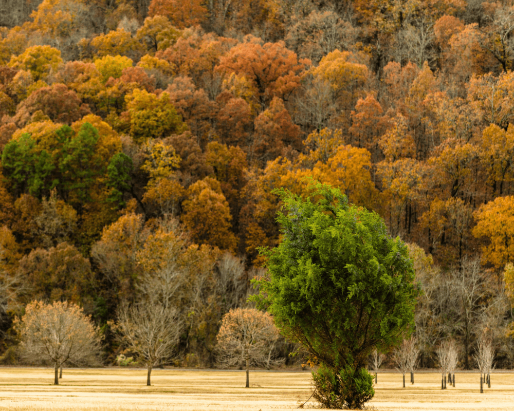 USA - Arkansas- Two Rivers Park