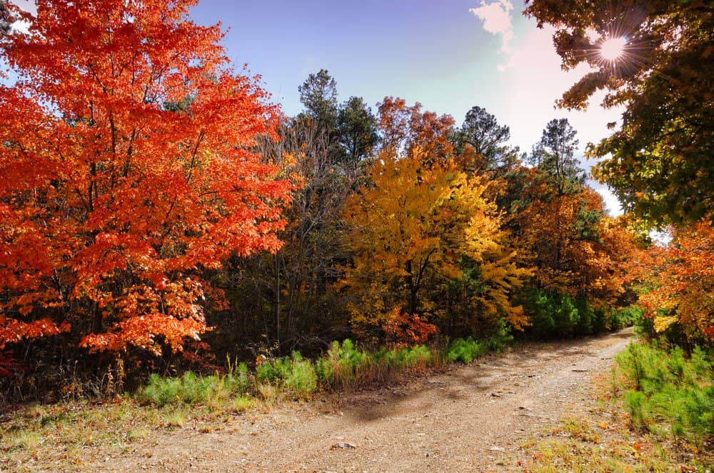 USA - Arkansas - Fall in the Talimena Scenic Byway