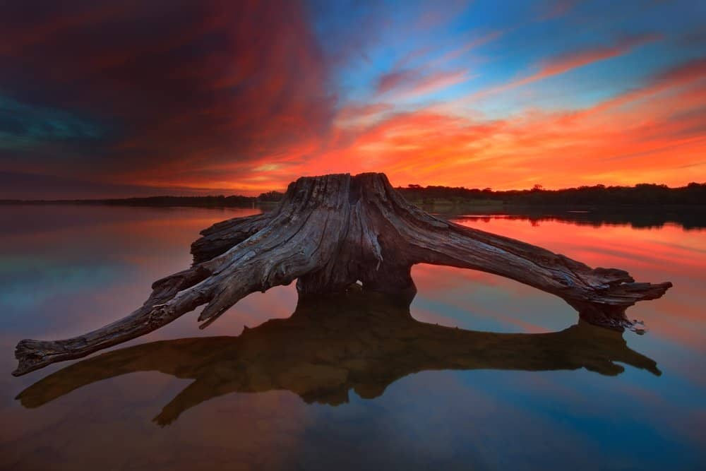 USA - Missouri - A piece of driftwood at Longview Lake during a vibrant sunrise.