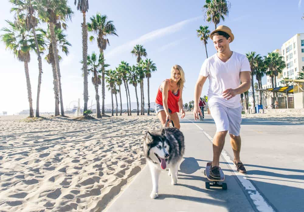 California - Beautiful couple skating with dog on ocean walk front during a summer vacation - Cheerful happy friends doing sport activity on the beach