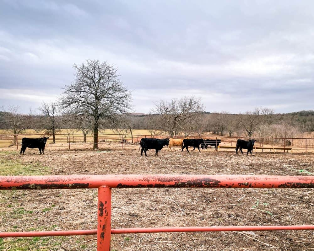Oklahoma - Yale - Battle of Round Mountain - Cow pen behind monument