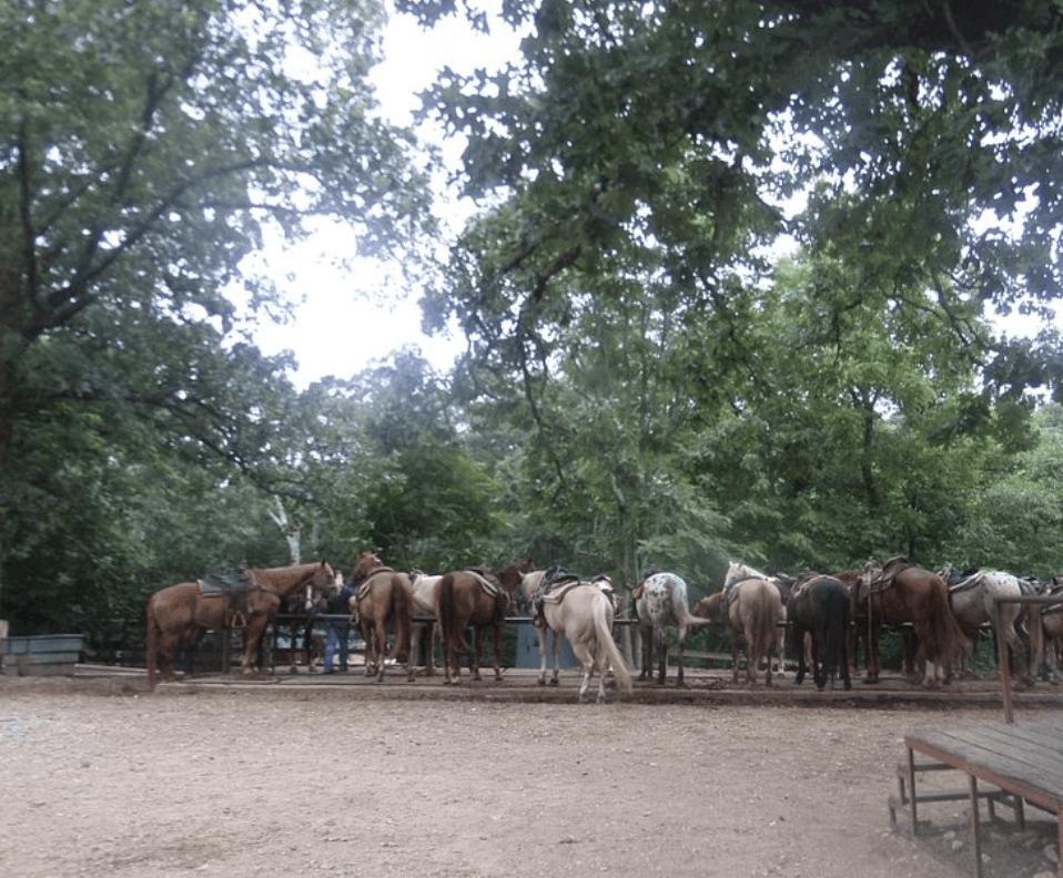 Arkansas - Mountain View - OK Trading Post