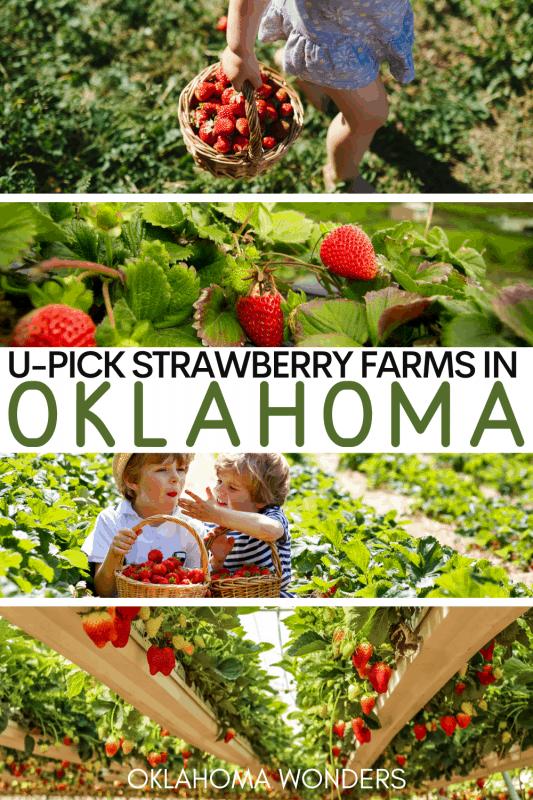 Best You Pick Strawberry Farms in Oklahoma - U-Pick Strawberry Farms near me - You Pick Strawberry Farms near OKC Tulsa