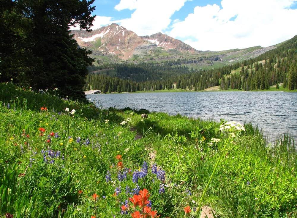 Colorado - Lake Irwin Crested Butte, Colorado mountain wildflowers