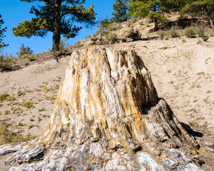 Colorado - Colorado National Parks - Florissant Fossil Beds National Monument