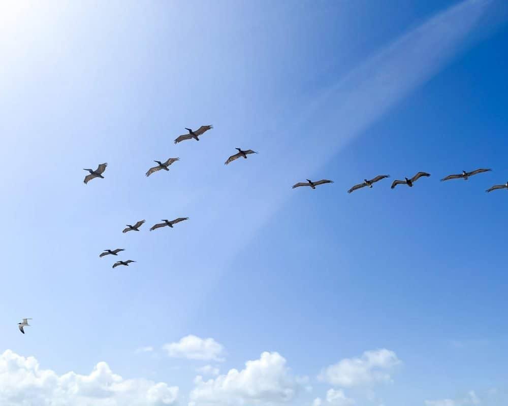 Texas - Corpus Christi - Mustang Island State Park - Birds and Bird Watching