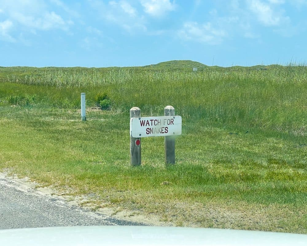 Texas - Corpus Christi - Mustang Island State Park - Watch for Snakes
