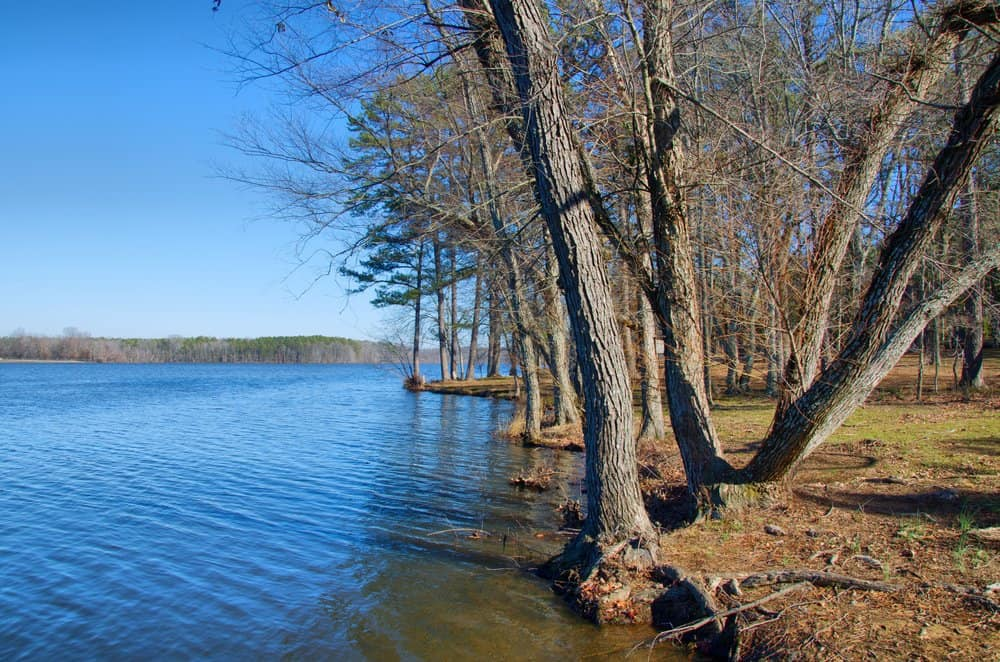 Trees,,Lake,In,Conway,Ar