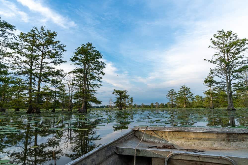Swamp,Boat,On,Horseshoe,Lake,In,Rural,Arkansas