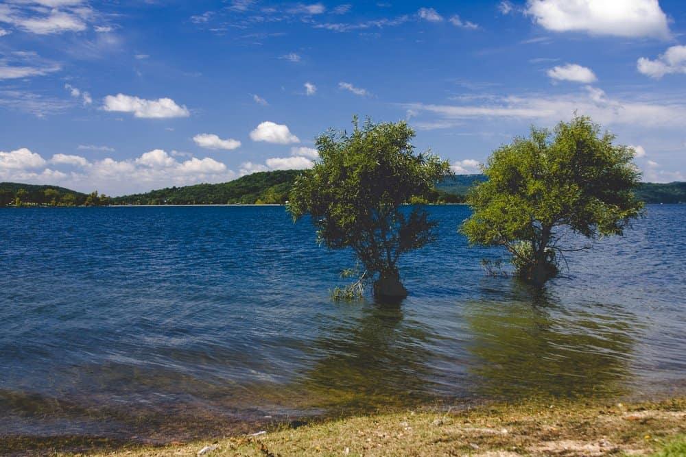 Trees,In,Beaver,Lake,Arkansas