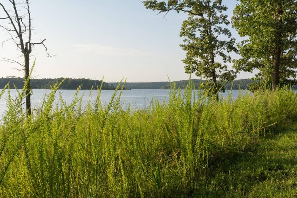 Lake,Norfork,Arkansas