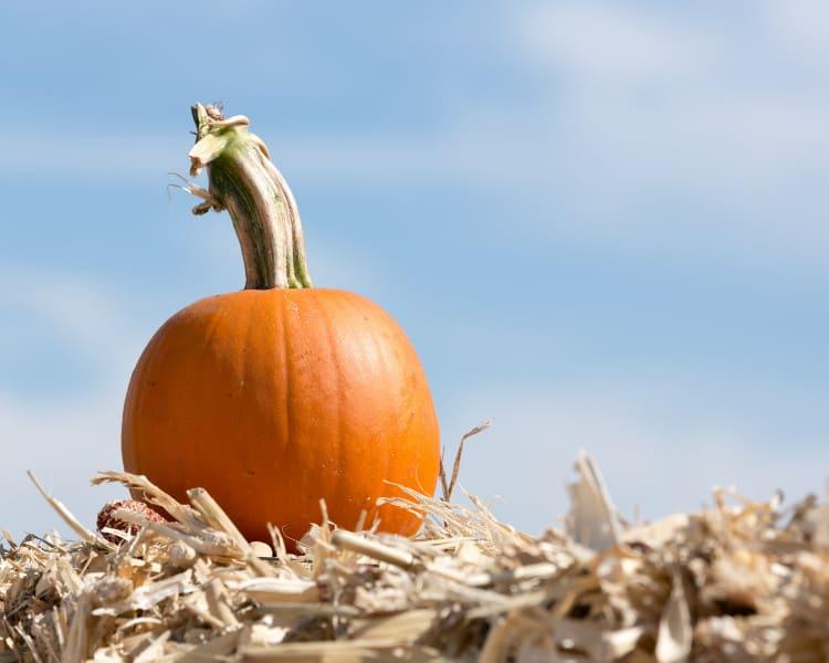 Pumpkin Farms in Oklahoma - Hayrides and Mazes - Fall Festivals - Oklahoma City - Edmond - Tulsa - Lawton - Broken Arrow - Norman - Stillwater-2