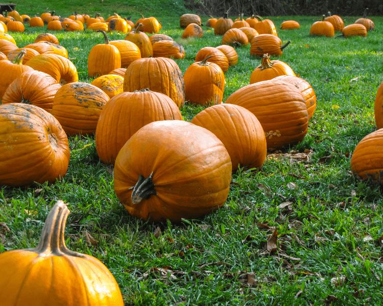 Oklahoma - Pumpkin Patches in Oklahoma - Oklahoma City - Edmond - Tulsa - Lawton - Broken Arrow - Norman - Stillwater